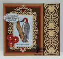 Birthday_Woodpecker_28129.jpg